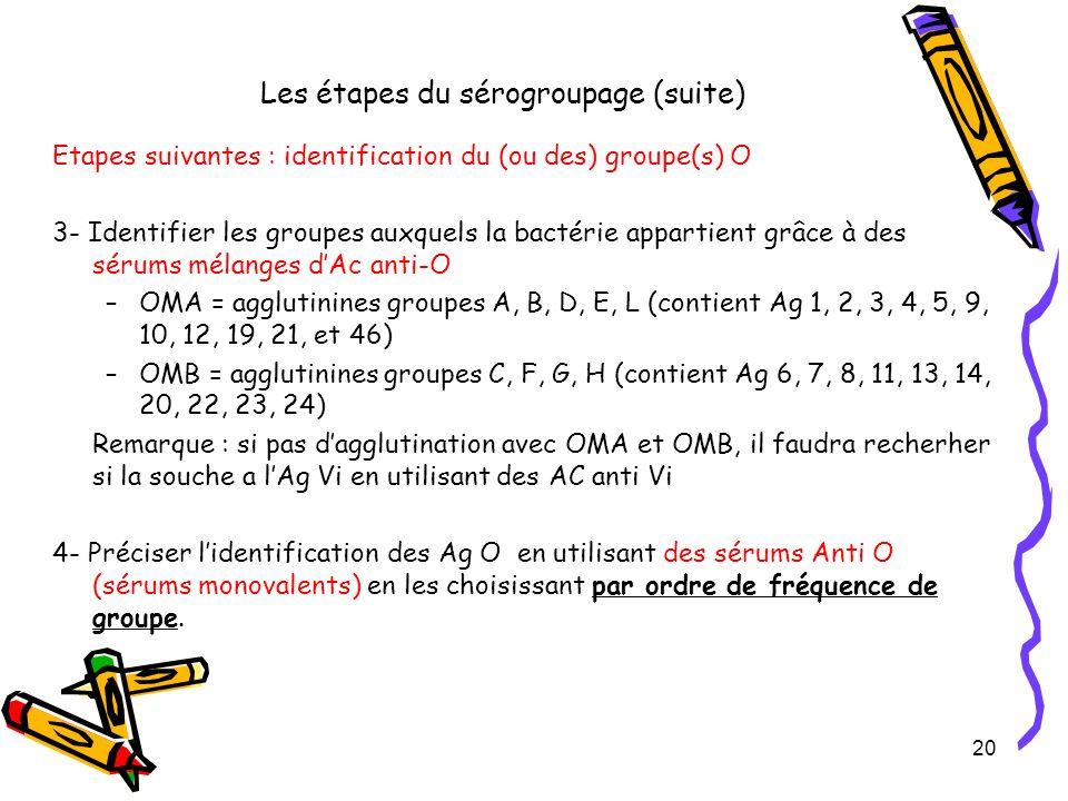 Les étapes du sérogroupage (suite) Etapes suivantes : identification du (ou des) groupe(s) O 3- Identifier les groupes auxquels la bactérie appartient
