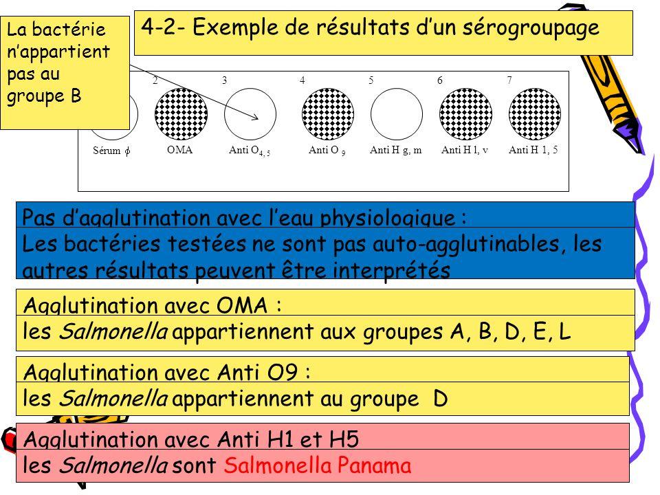 22 12 34 56 Sérum OMA Anti O 4, 5 Anti O 9 Anti H g, mAnti H l, v 7 Anti H 1, 5 4-2- Exemple de résultats dun sérogroupage Pas dagglutination avec lea