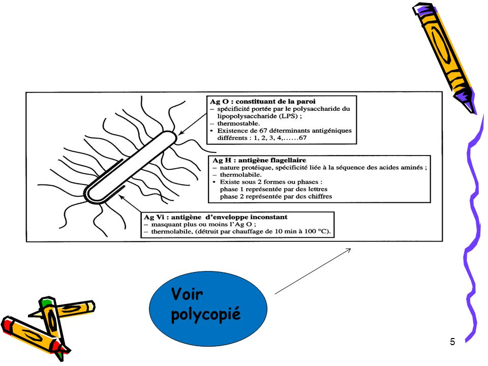 5 Voir polycopié