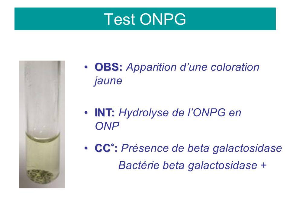 Test ONPG OBS:OBS: Apparition dune coloration jaune INT:INT: Hydrolyse de lONPG en ONP CC°:CC°: Présence de beta galactosidase Bactérie beta galactosidase +