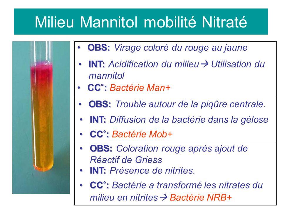Milieu Mannitol mobilité Nitraté OBS:OBS: Virage coloré du rouge au jaune INT:INT: Acidification du milieu Utilisation du mannitol CC°:CC°: Bactérie Man+ OBS:OBS: Trouble autour de la piqûre centrale.