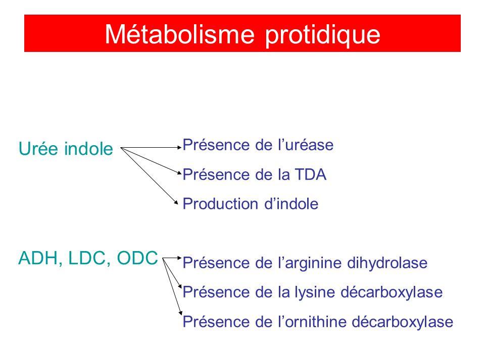 Métabolisme protidique Urée indole ADH, LDC, ODC Présence de luréase Présence de la TDA Production dindole Présence de larginine dihydrolase Présence de la lysine décarboxylase Présence de lornithine décarboxylase