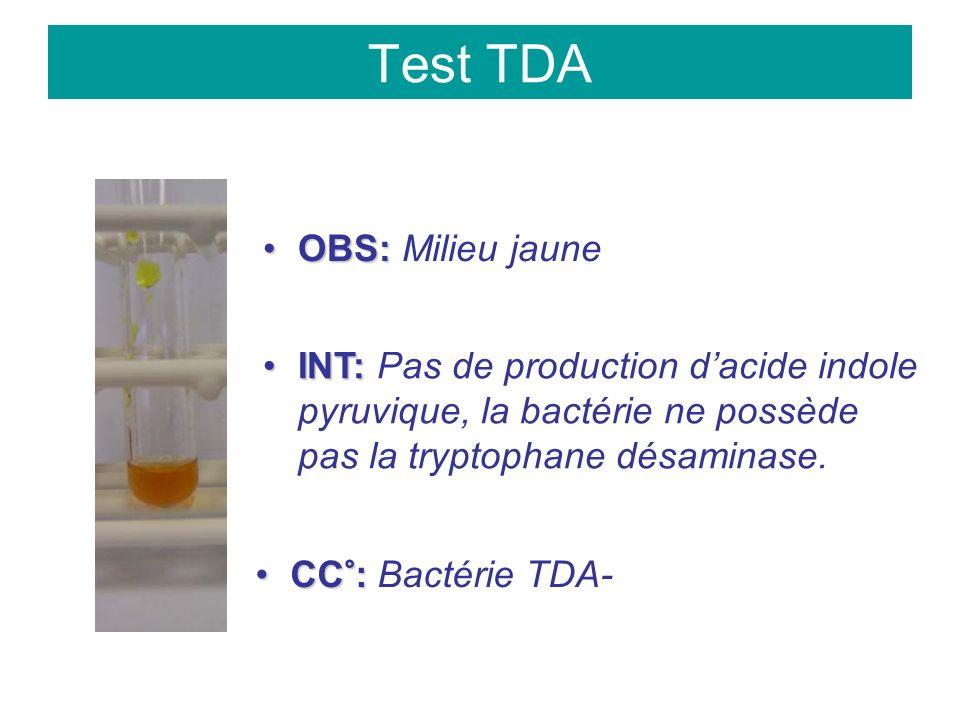 Test TDA OBS:OBS: Milieu jaune INT:INT: Pas de production dacide indole pyruvique, la bactérie ne possède pas la tryptophane désaminase.