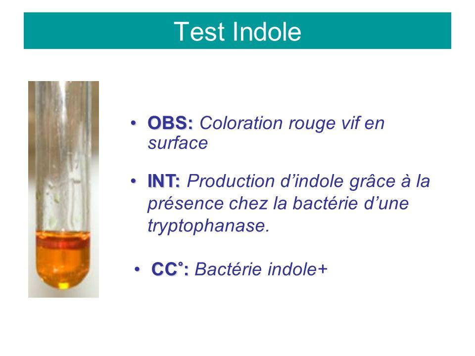 Test Indole OBS:OBS: Coloration rouge vif en surface INT:INT: Production dindole grâce à la présence chez la bactérie dune tryptophanase.