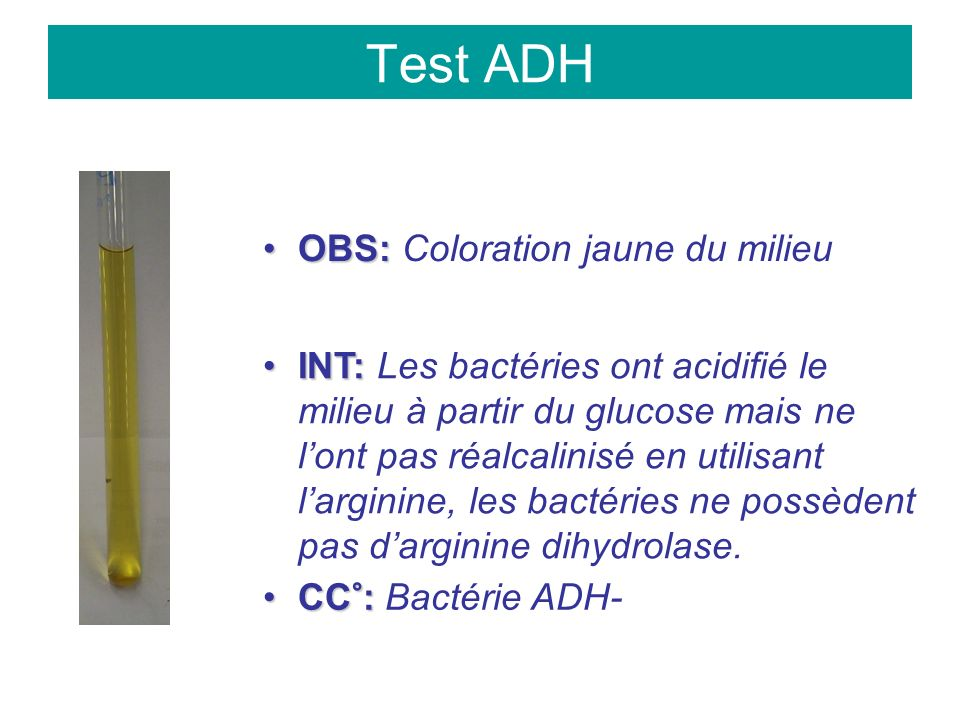 Test ADH OBS:OBS: Coloration jaune du milieu INT:INT: Les bactéries ont acidifié le milieu à partir du glucose mais ne lont pas réalcalinisé en utilisant larginine, les bactéries ne possèdent pas darginine dihydrolase.