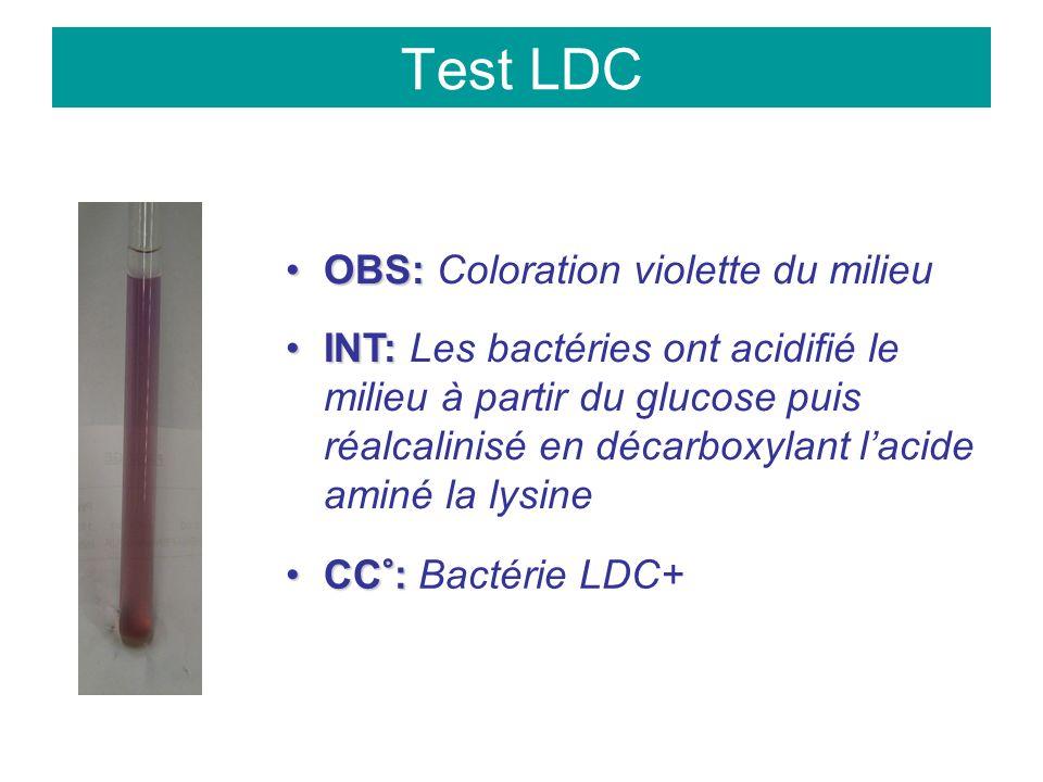 Test LDC OBS:OBS: Coloration violette du milieu INT:INT: Les bactéries ont acidifié le milieu à partir du glucose puis réalcalinisé en décarboxylant lacide aminé la lysine CC°:CC°: Bactérie LDC+