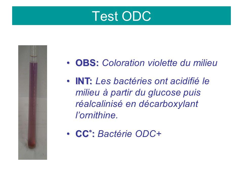 Test ODC OBS:OBS: Coloration violette du milieu INT:INT: Les bactéries ont acidifié le milieu à partir du glucose puis réalcalinisé en décarboxylant lornithine.