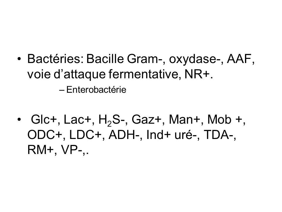 Bactéries: Bacille Gram-, oxydase-, AAF, voie dattaque fermentative, NR+.