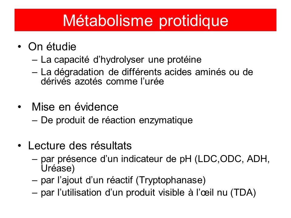 On étudie –La capacité dhydrolyser une protéine –La dégradation de différents acides aminés ou de dérivés azotés comme lurée Mise en évidence –De produit de réaction enzymatique Lecture des résultats –par présence dun indicateur de pH (LDC,ODC, ADH, Uréase) –par lajout dun réactif (Tryptophanase) –par lutilisation dun produit visible à lœil nu (TDA) Métabolisme protidique