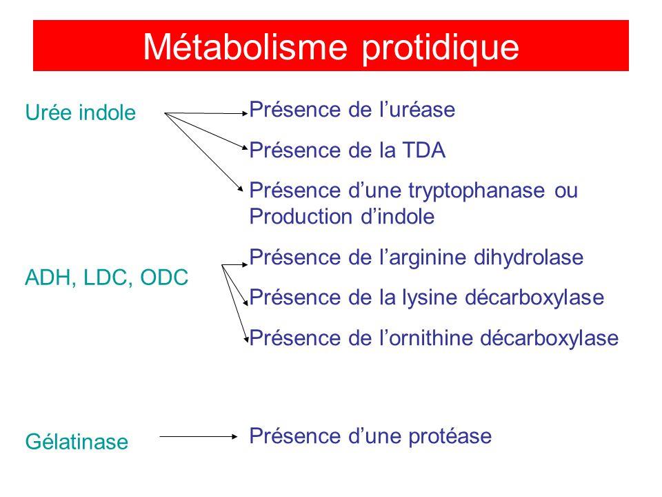 Urée indole ADH, LDC, ODC Gélatinase Présence de luréase Présence de la TDA Présence dune tryptophanase ou Production dindole Présence de larginine dihydrolase Présence de la lysine décarboxylase Présence de lornithine décarboxylase Présence dune protéase