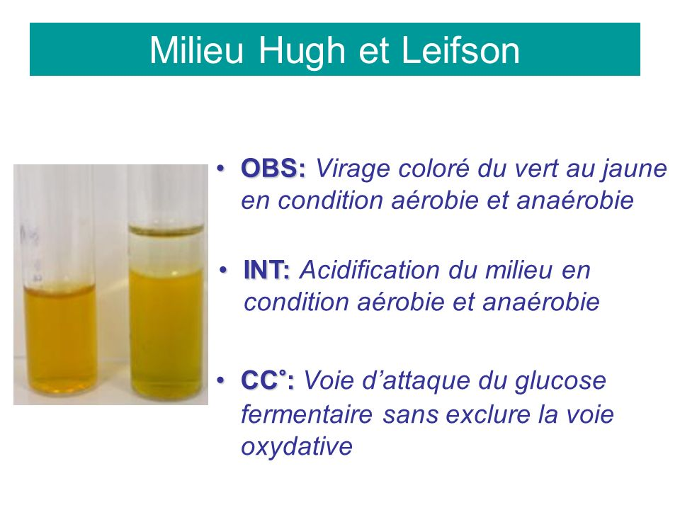 Milieu Hugh et Leifson OBS:OBS: Virage coloré du vert au jaune en condition aérobie et anaérobie INT:INT: Acidification du milieu en condition aérobie et anaérobie CC°:CC°: Voie dattaque du glucose fermentaire sans exclure la voie oxydative