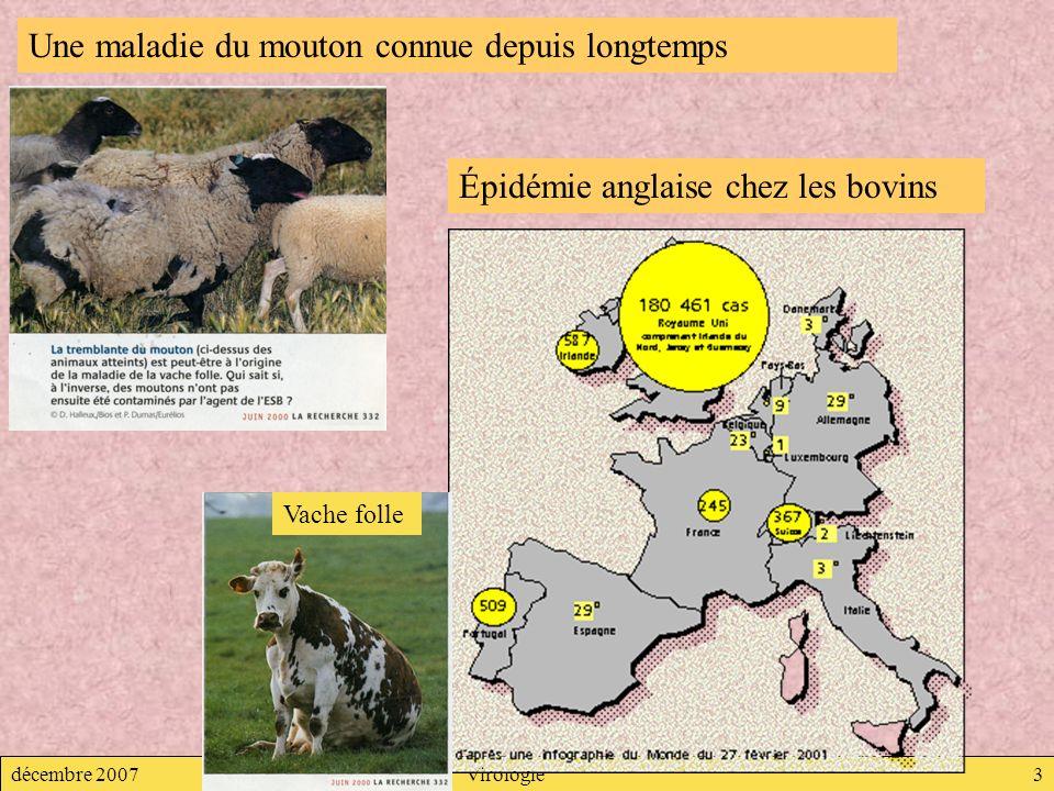 décembre 2007Virologie3 Une maladie du mouton connue depuis longtemps Vache folle Épidémie anglaise chez les bovins