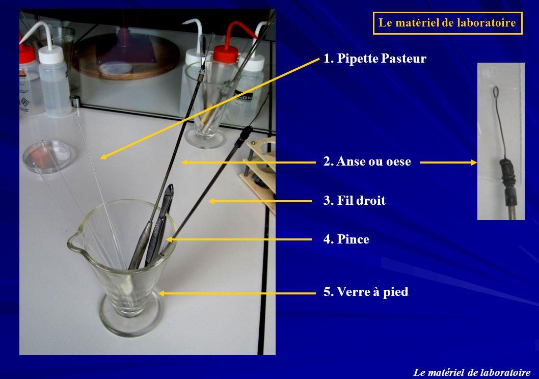 1. Pipette Pasteur 5. Verre à pied 2. Anse ou oese 3. Fil droit 4. Pince Le matériel de laboratoire