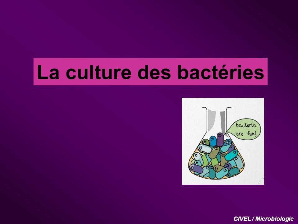 La culture des bactéries I.
