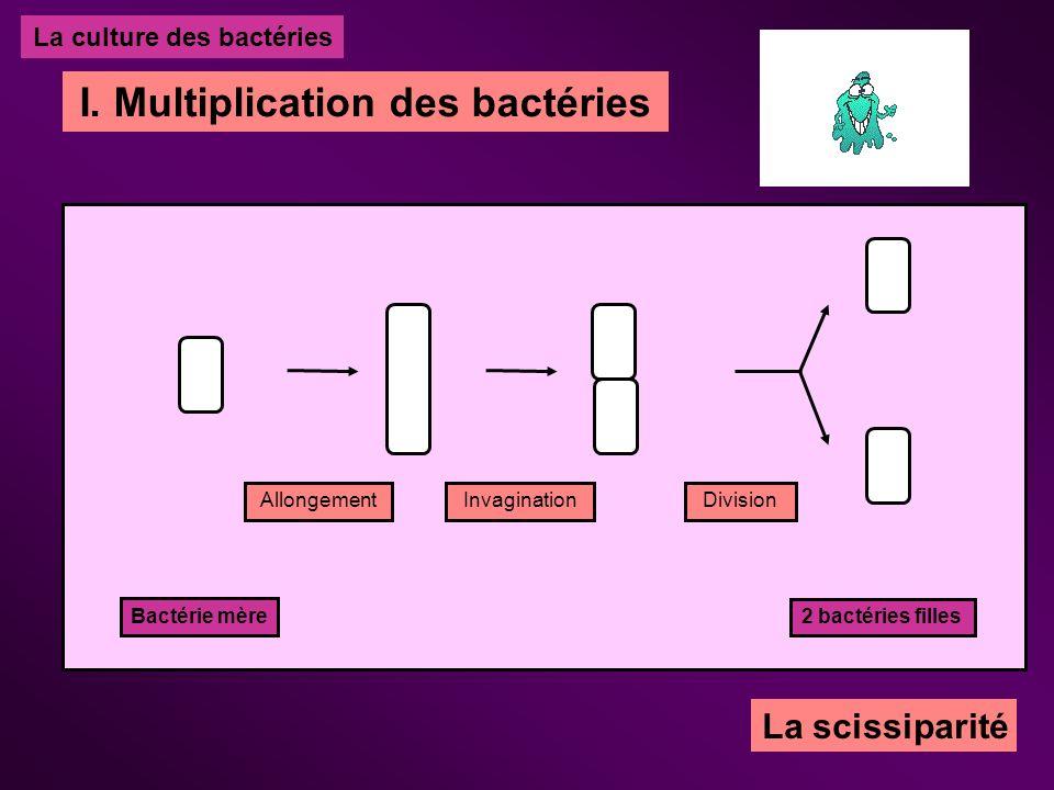 La culture des bactéries I. Multiplication des bactéries Bactérie mère AllongementInvaginationDivision 2 bactéries filles La scissiparité