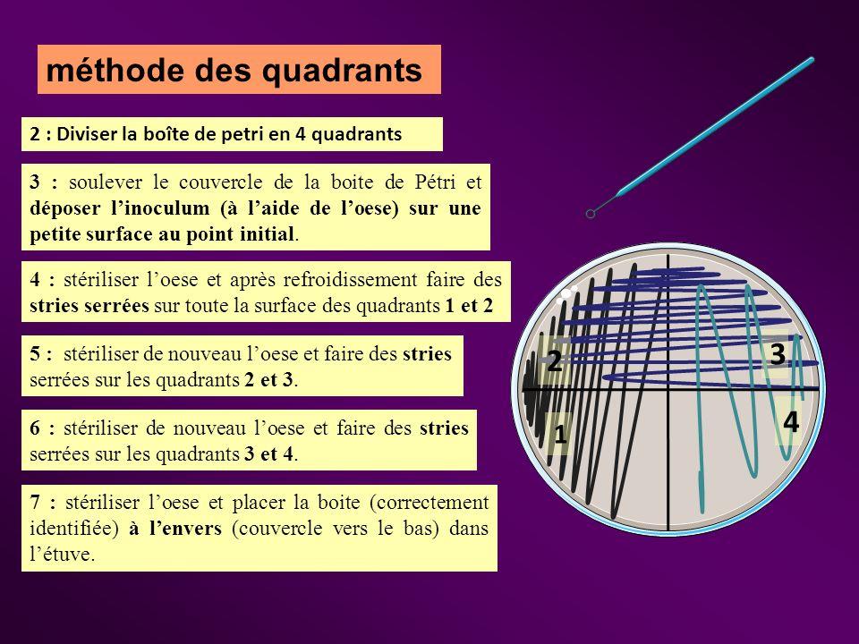méthode des quadrants 2 : Diviser la boîte de petri en 4 quadrants 3 : soulever le couvercle de la boite de Pétri et déposer linoculum (à laide de loe