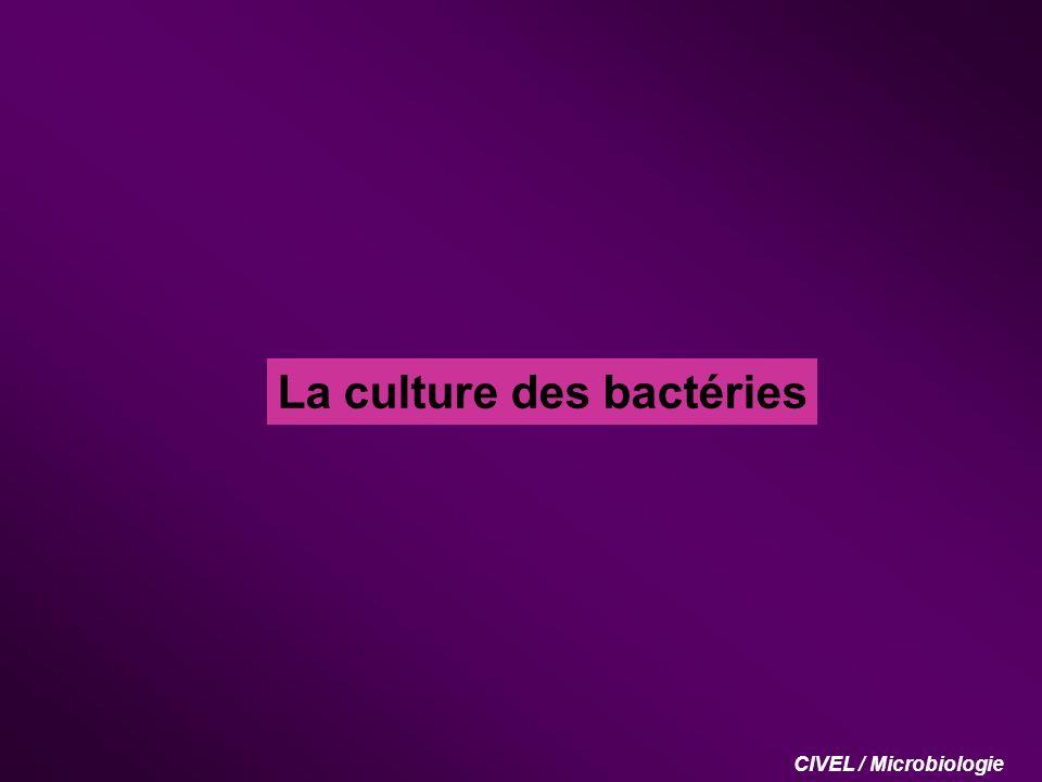La culture des bactéries CIVEL / Microbiologie