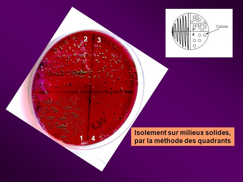 La culture des bactéries II.