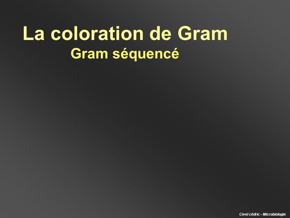 Réalisation dun frottis portant 2 spots (lun composé de bactéries Gram + et lautre de bactéries Gram -) S E Frottis 1 spot double : S + E S + E Gram + Gram -