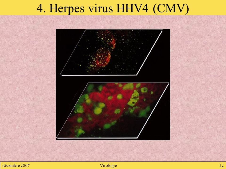 décembre 2007Virologie12 4. Herpes virus HHV4 (CMV)