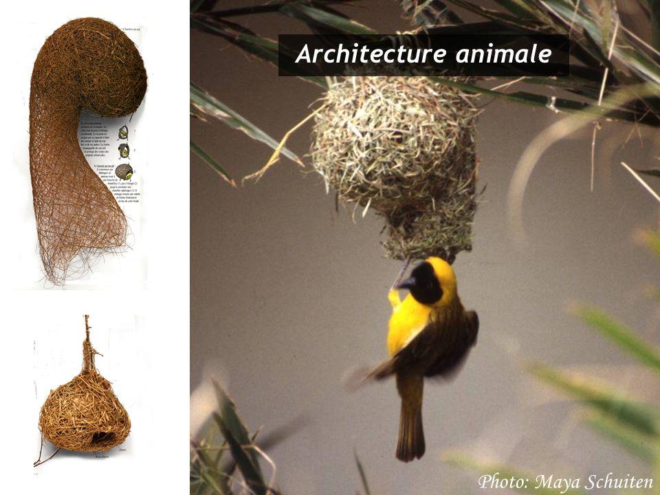 Photo: Maya Schuiten Architecture animale