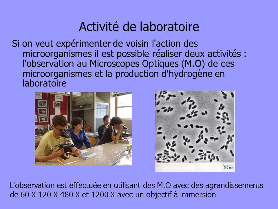 Activité de laboratoire Si on veut expérimenter de voisin l'action des microorganismes il est possible réaliser deux activités : l'observation au Micr