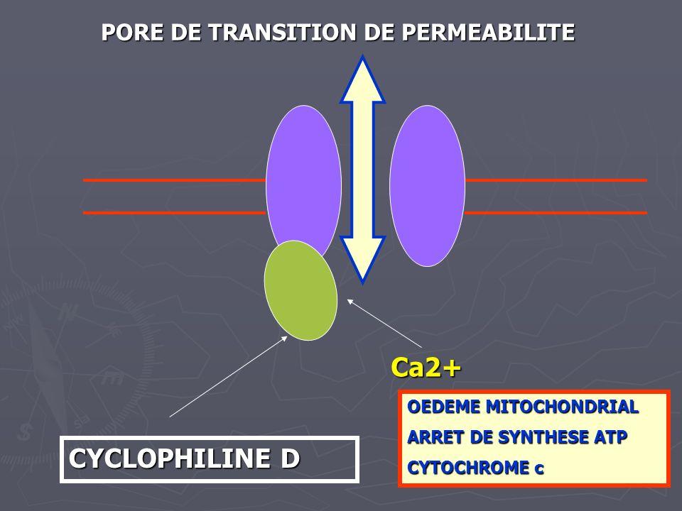 CYCLOPHILINE D Ca2+ PORE DE TRANSITION DE PERMEABILITE OEDEME MITOCHONDRIAL ARRET DE SYNTHESE ATP CYTOCHROME c