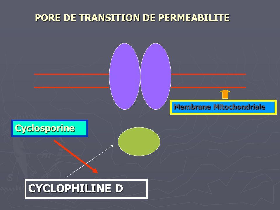 CYCLOPHILINE D PORE DE TRANSITION DE PERMEABILITE Membrane Mitochondriale Cyclosporine