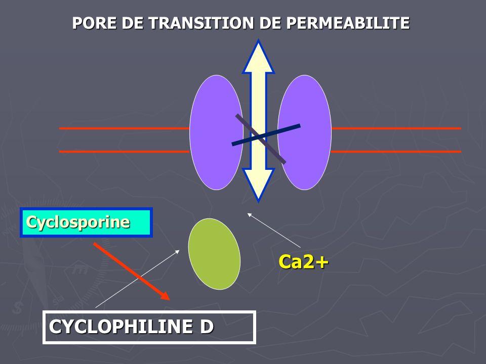 CYCLOPHILINE D Ca2+ PORE DE TRANSITION DE PERMEABILITE Cyclosporine