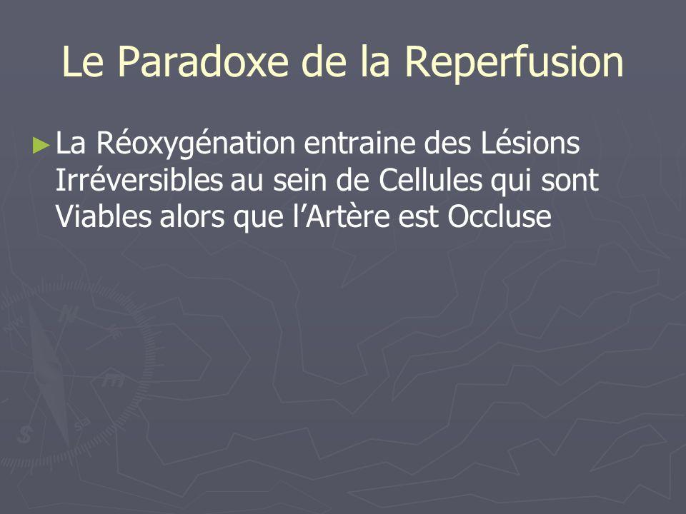Le Paradoxe de la Reperfusion La Réoxygénation entraine des Lésions Irréversibles au sein de Cellules qui sont Viables alors que lArtère est Occluse