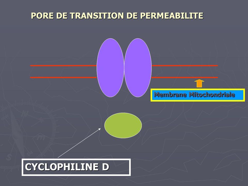 CYCLOPHILINE D PORE DE TRANSITION DE PERMEABILITE Membrane Mitochondriale