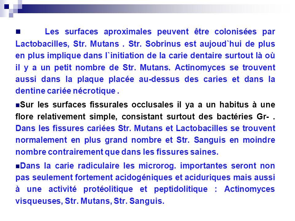 Les surfaces aproximales peuvent être colonisées par Lactobacilles, Str. Mutans. Str. Sobrinus est aujoud`hui de plus en plus implique dans l`initiati