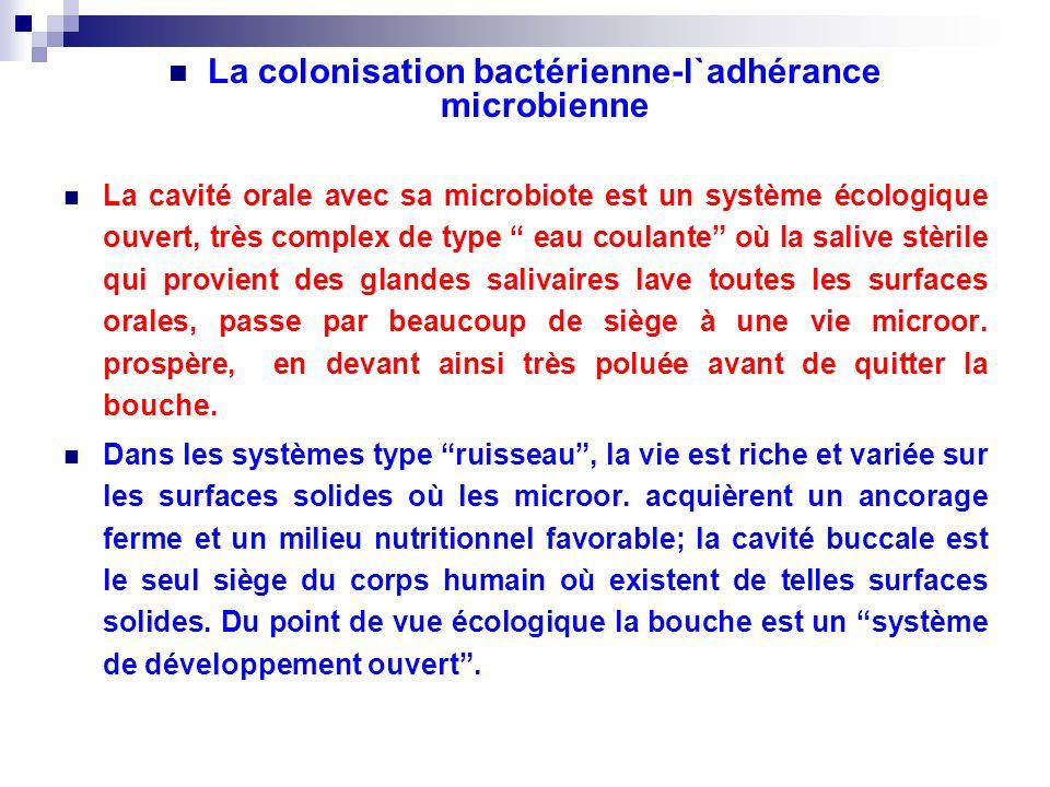La colonisation bactérienne-l`adhérance microbienne La cavité orale avec sa microbiote est un système écologique ouvert, très complex de type eau coul