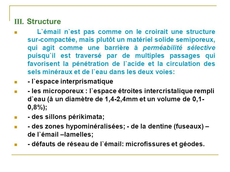 III. Structure L`émail n`est pas comme on le croirait une structure sur-compactée, mais plutôt un matériel solide semiporeux, qui agit comme une barri
