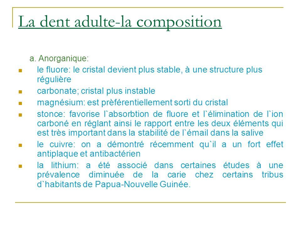 La dent adulte-la composition a. Anorganique: le fluore: le cristal devient plus stable, à une structure plus régulière carbonate; cristal plus instab