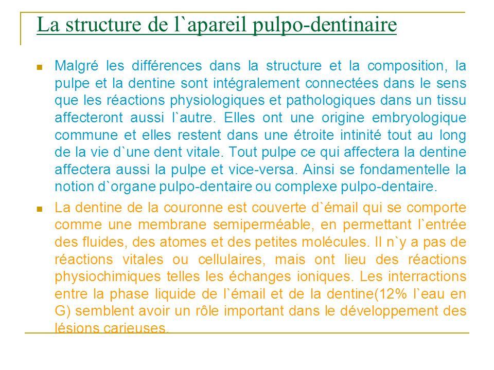 La structure de l`apareil pulpo-dentinaire Malgré les différences dans la structure et la composition, la pulpe et la dentine sont intégralement conne