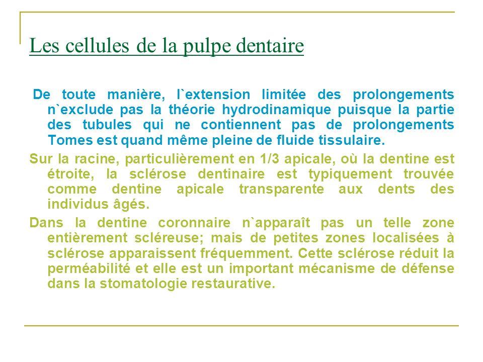 Les cellules de la pulpe dentaire De toute manière, l`extension limitée des prolongements n`exclude pas la théorie hydrodinamique puisque la partie de