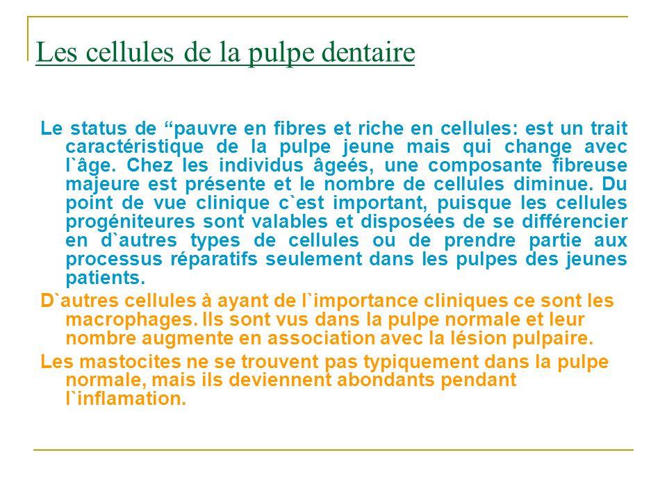 Les cellules de la pulpe dentaire Le status de pauvre en fibres et riche en cellules: est un trait caractéristique de la pulpe jeune mais qui change a