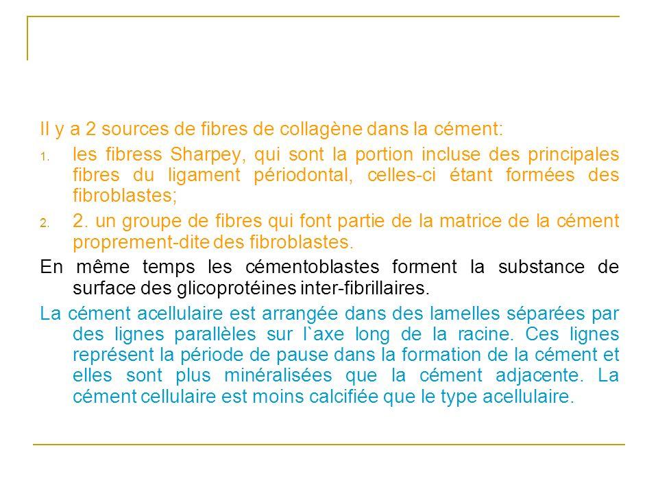 Il y a 2 sources de fibres de collagène dans la cément: 1. les fibress Sharpey, qui sont la portion incluse des principales fibres du ligament périodo