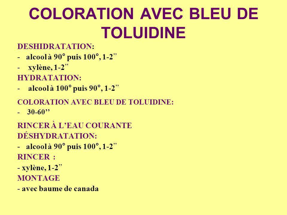 COLORATION AVEC BLEU DE TOLUIDINE DESHIDRATATION: - alcool à 90° puis 100°, 1-2 -xylène, 1-2 HYDRATATION: -alcool à 100° puis 90°, 1-2 COLORATION AVEC