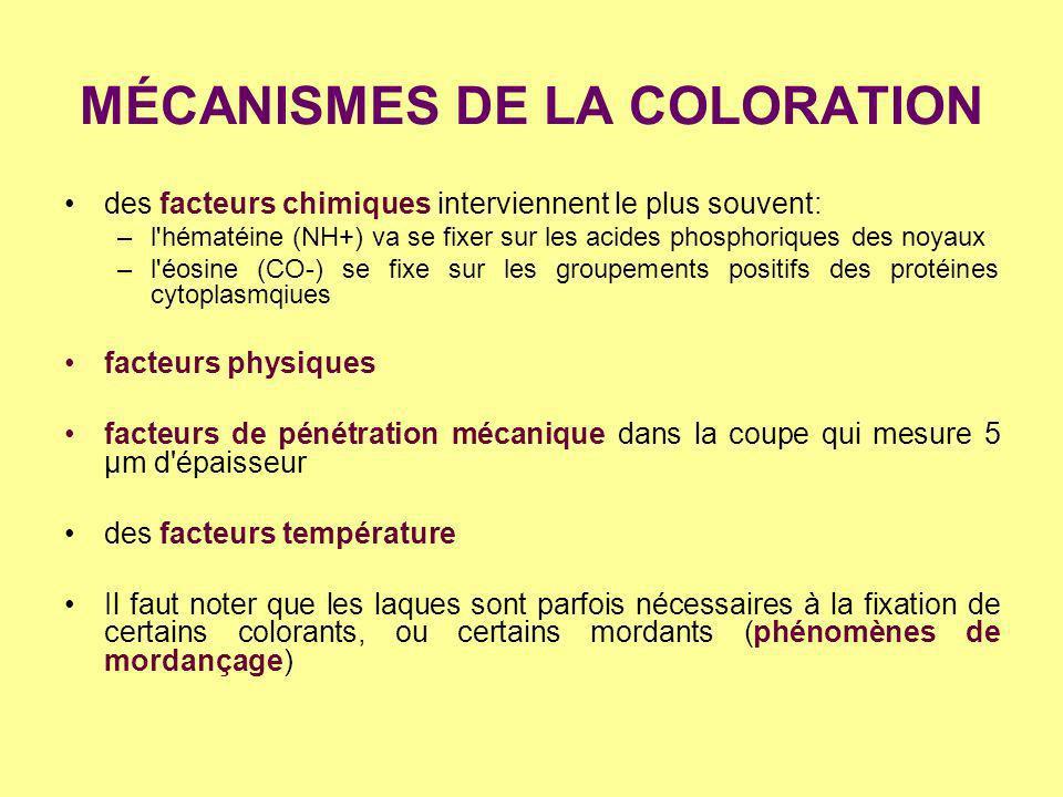 MÉCANISMES DE LA COLORATION des facteurs chimiques interviennent le plus souvent: –l'hématéine (NH+) va se fixer sur les acides phosphoriques des noya