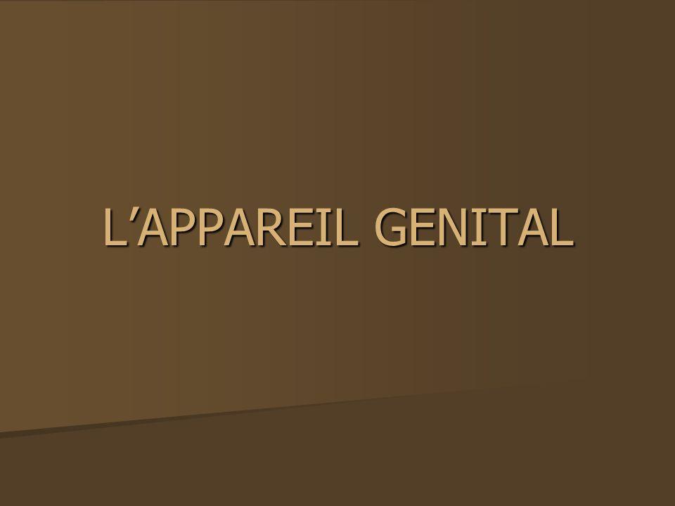 LAPPAREIL GENITAL