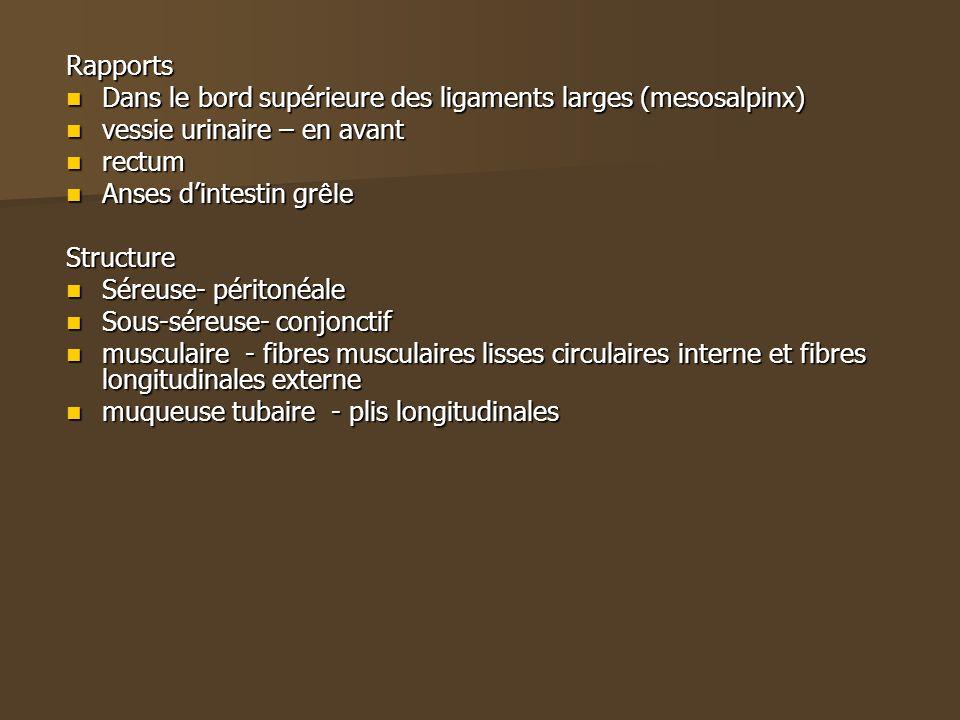 Rapports Dans le bord supérieure des ligaments larges (mesosalpinx) Dans le bord supérieure des ligaments larges (mesosalpinx) vessie urinaire – en av