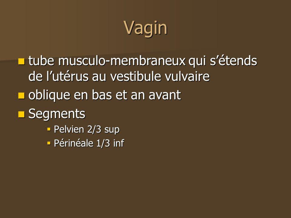 Vagin tube musculo-membraneux qui sétends de lutérus au vestibule vulvaire tube musculo-membraneux qui sétends de lutérus au vestibule vulvaire obliqu