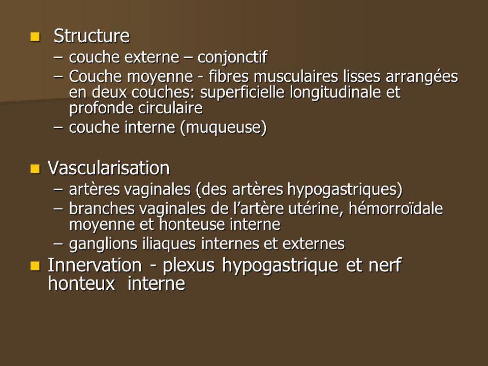 Structure Structure –couche externe – conjonctif –Couche moyenne - fibres musculaires lisses arrangées en deux couches: superficielle longitudinale et