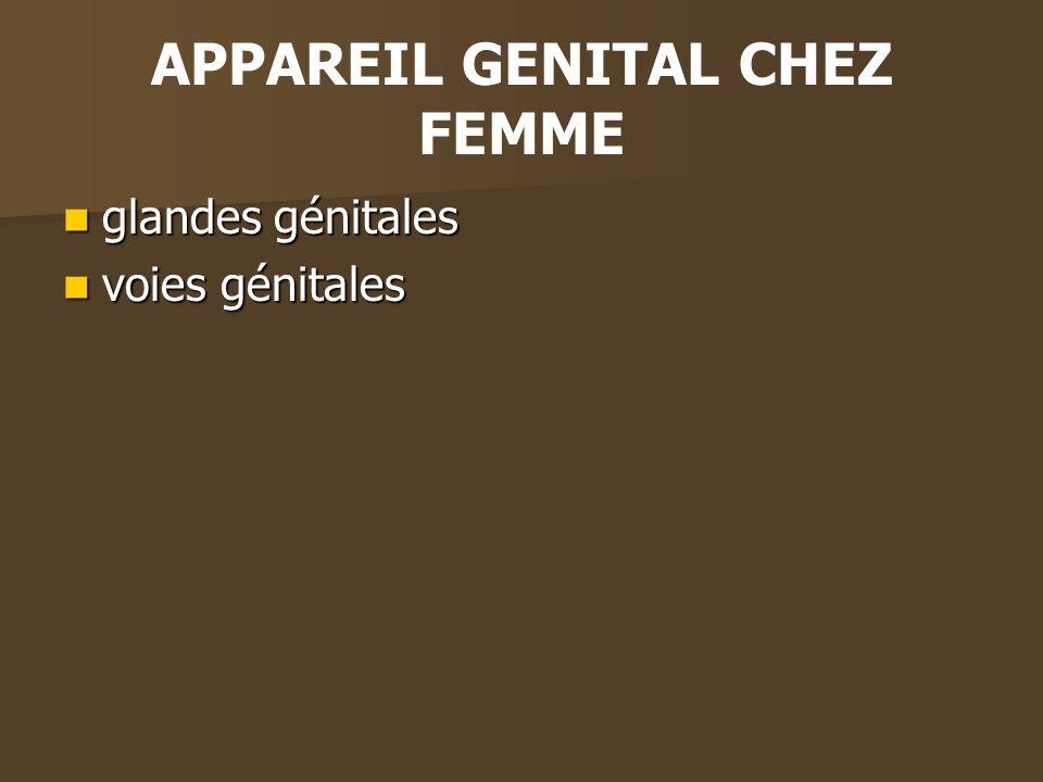 APPAREIL GENITAL CHEZ FEMME glandes génitales glandes génitales voies génitales voies génitales