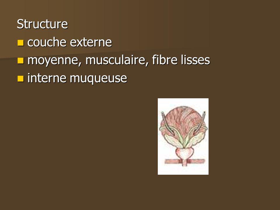 Structure couche externe couche externe moyenne, musculaire, fibre lisses moyenne, musculaire, fibre lisses interne muqueuse interne muqueuse