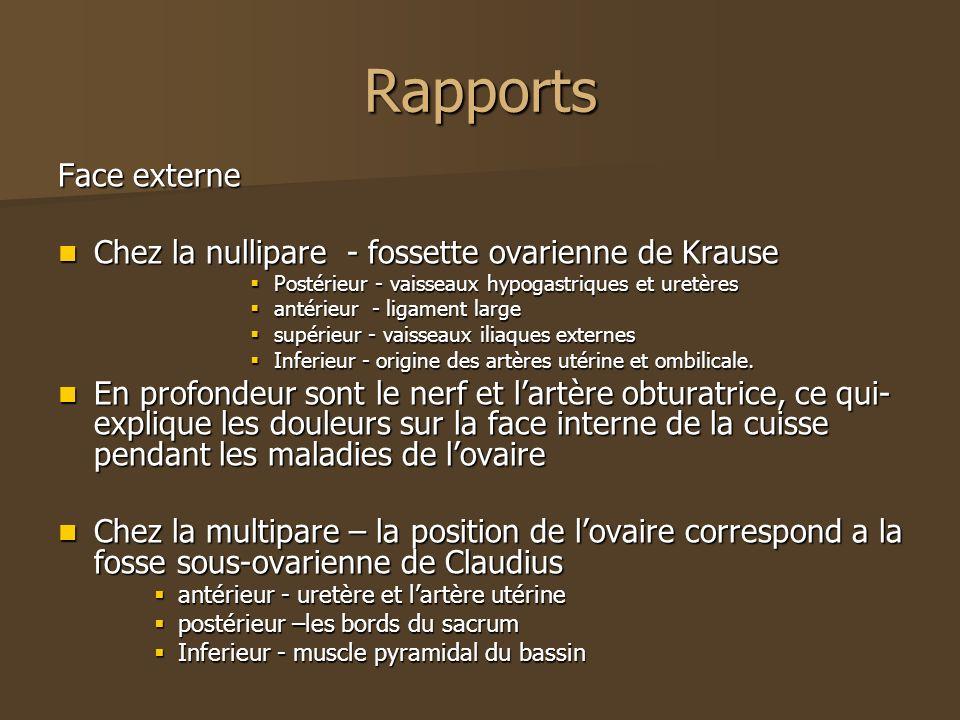 Rapports Face externe Chez la nullipare - fossette ovarienne de Krause Chez la nullipare - fossette ovarienne de Krause Postérieur - vaisseaux hypogas