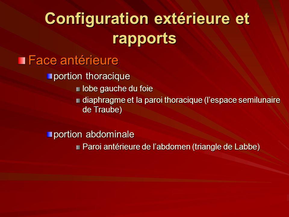 Configuration extérieure et rapports Configuration extérieure et rapports Face antérieure portion thoracique lobe gauche du foie diaphragme et la paro