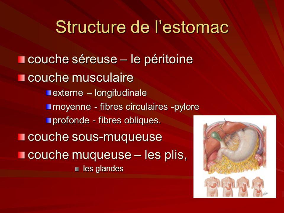 Structure de lestomac couche séreuse – le péritoine couche musculaire externe – longitudinale moyenne - fibres circulaires -pylore profonde - fibres o